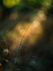 Relieving Light by saabie