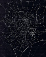 Spider's Web by nudge1