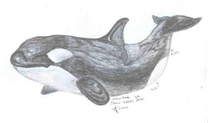Female Orca - Dream by OrcaSpitt