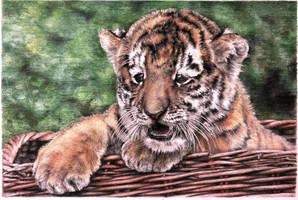 tigrenok by naglets