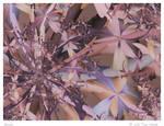 Sarah by aartika-fractal-art