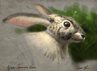 African Savanna Hare by ablaise