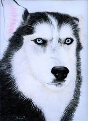 Behind blue eyes by SimplyACat