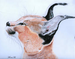 Caracal by SimplyACat