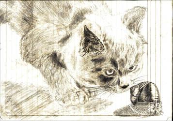 Gato y caracol by Juracan