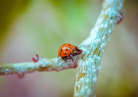 Ladybug by 3liah