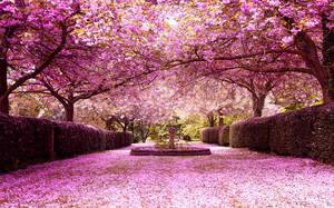 Blossom central by PGDsx