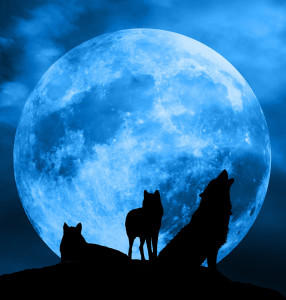 nightwolf3524's Profile Picture