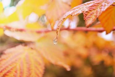 Autumn rain. by aaandreeac