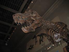 T Rex Stock by Ealucids-Photos