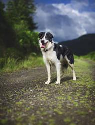 Altis - hiking in Glen Loin by Aenkill