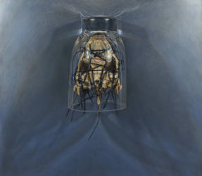 Bone Icon, Ghost Moth by Jumprabbit