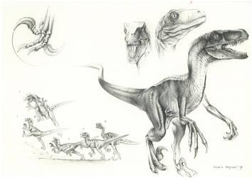 JP Velociraptor by PaleoPastori