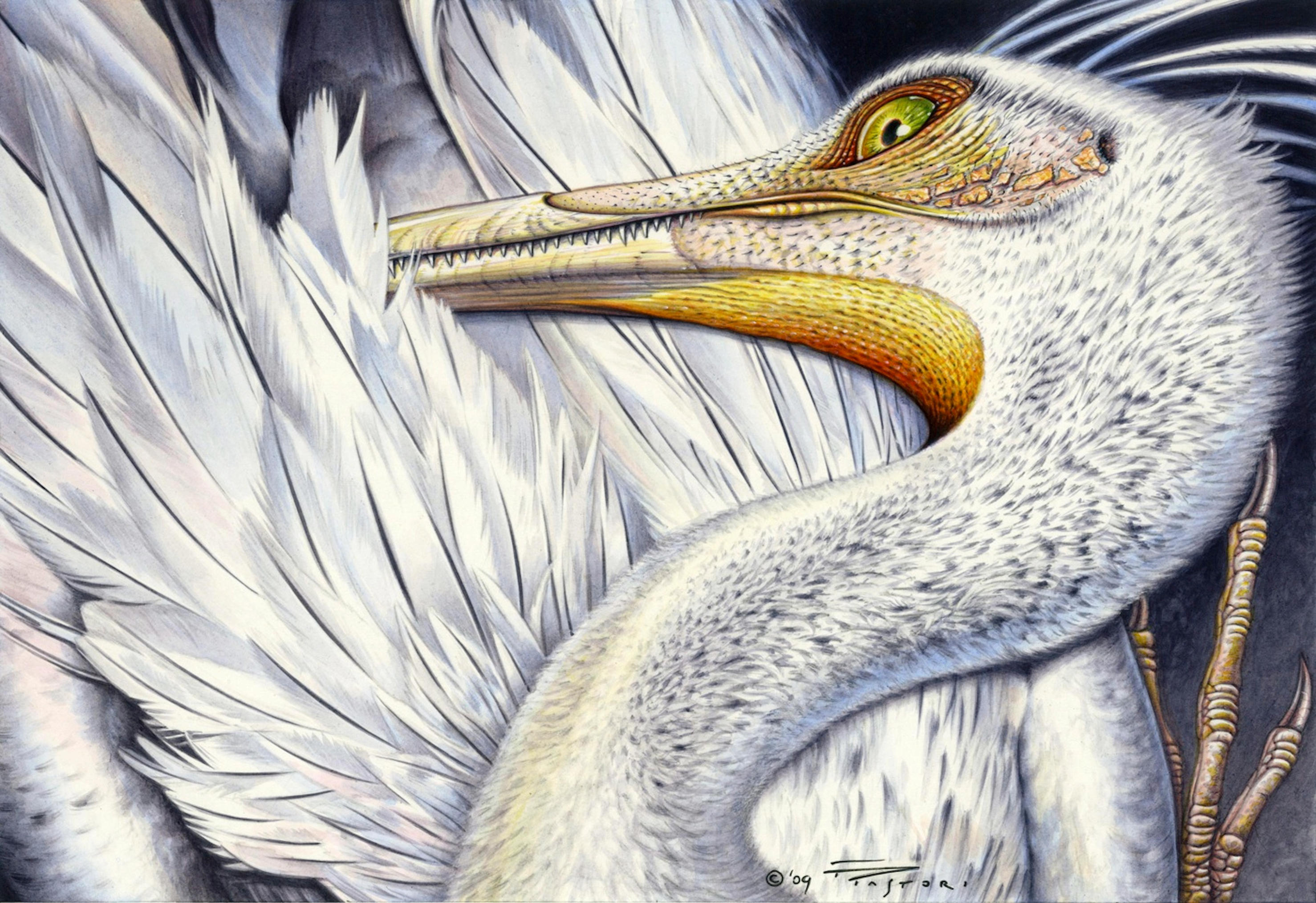 Unenlagia comahuensis by PaleoPastori
