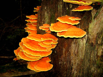 There's Fungus Amongus by wagn18