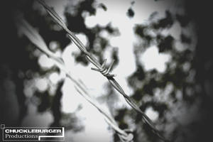 What's beyond the dividing wire? by wagn18