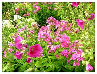 Flores II by pfabregat