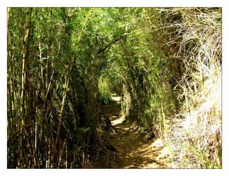 Camino de Colihues by pfabregat