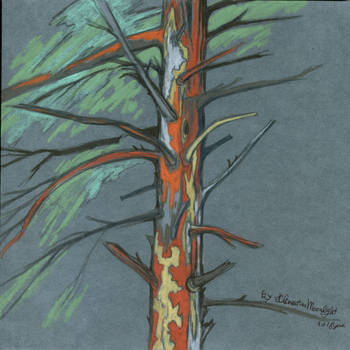 Orange tree. by KlementinaMoonlight