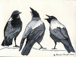 Crows. by KlementinaMoonlight