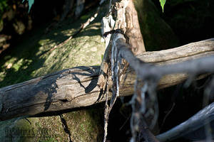 Branch by aheria