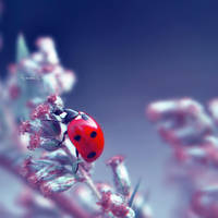 Ladybug by kczajkowska