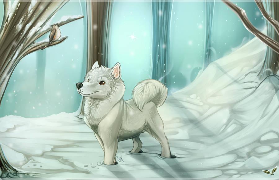 Winter in Summerland! + Video! by GoPuppy