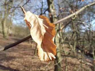 Suncaught leaf by jadedlioness