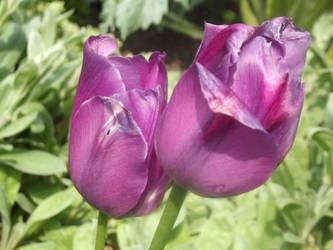 Campus Flowers #9 by jadedlioness