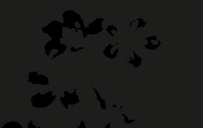 Black Flowers by jadedlioness