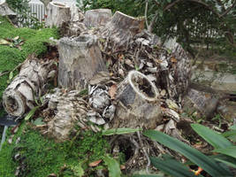 Kew Gardens: Tree Stump by jadedlioness