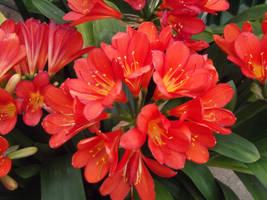 Kew Gardens: Flowers #18 by jadedlioness