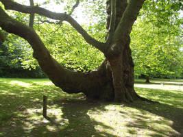 Trees in sunlight by jadedlioness