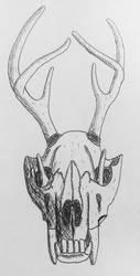 wolf skull by itzthedave
