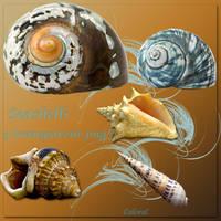 Seashells by libidules