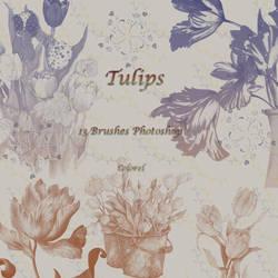 Tulips by libidules