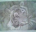 tiger by jazzygirrl07