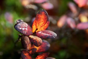 FireBlossom by Munin5