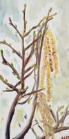 Hazelnut catkins by Starsong-Studio