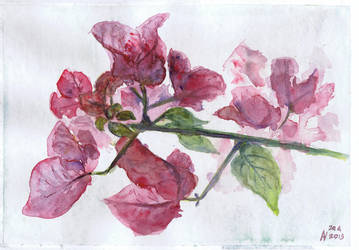 Bougainvillea by Starsong-Studio