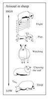 Open  Polytechnic: sheep behaviour by Starsong-Studio