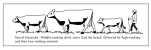 Open Polytechnic: cow hierarchy by Starsong-Studio