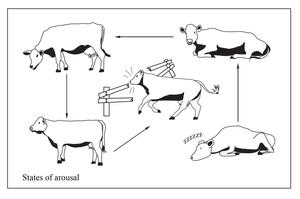 Open Polytechnic: cow behaviour by Starsong-Studio