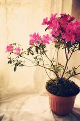 Spring time by raoros