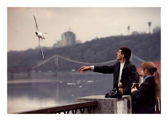 feed the gull by sashcko