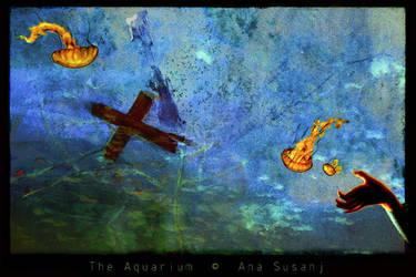 The Aquarium. by agonis