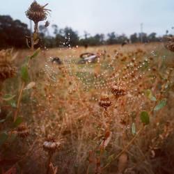 Dewdrop by Treeflowersweet