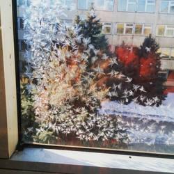 Frosty Pattern by Treeflowersweet