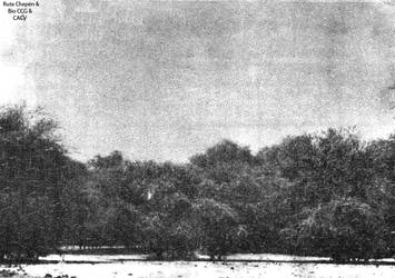 1993 (8) 1993-1994 Algarrobos area de Bosque Tropi by Chepen-Ruta