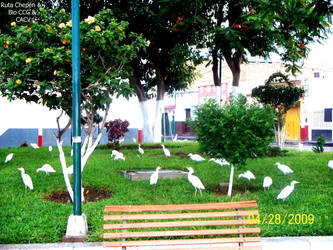8 2009 Plaza de Armas by Chepen-Ruta